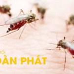 Banner diệt muỗi Toàn Phát