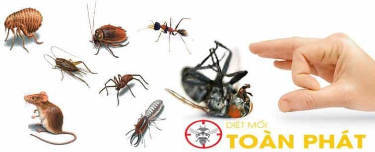 banner diệt côn trùng toàn phát
